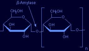 amylazy