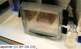 elektroforeza białek