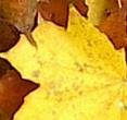kolor liści