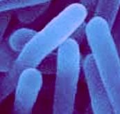 mikroorganizmy bioługowanie