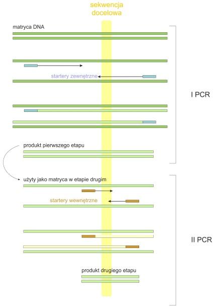 Zasada metody nested PCR