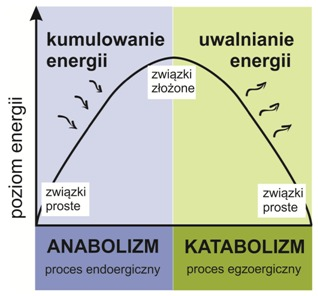 procesy anaboliczne przyklady