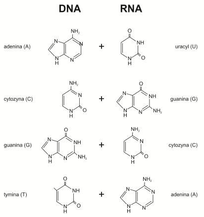 Transkrypcja Biotechnologia E Biotechnologia Pl